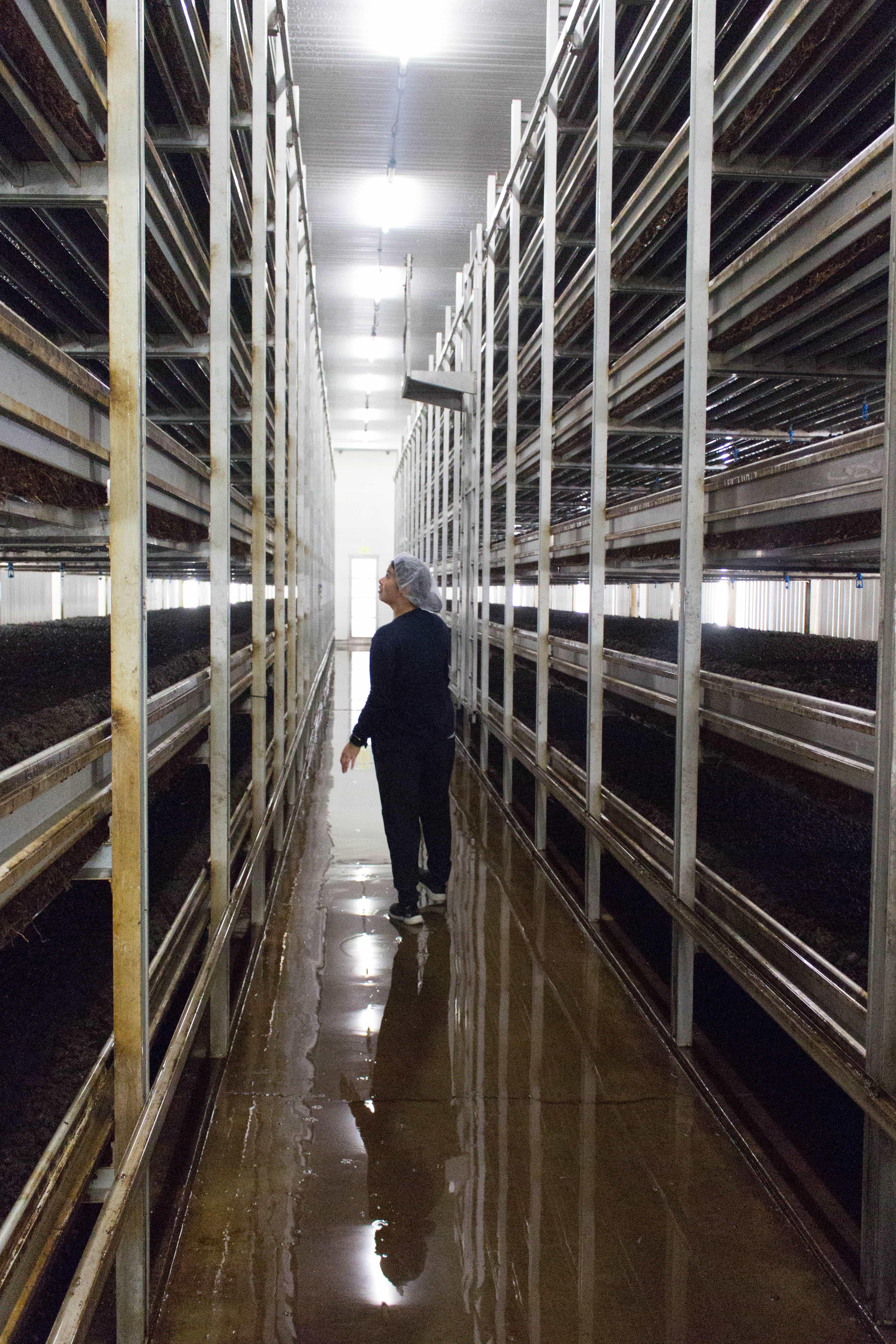 Mushroom Farms Ontario Whitecrest